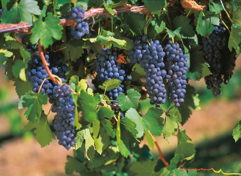 rijke vruchten